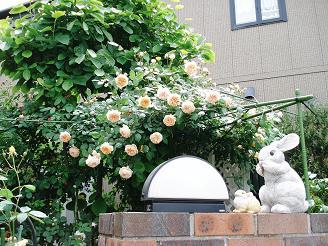 駐車場から見たパーゴラのバラ